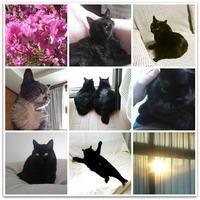 my_cat_collage_1