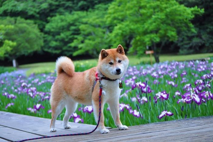Q1菖蒲園をお散歩7_original