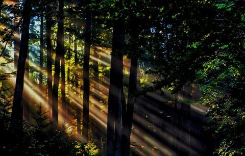 森の木漏れ日(プロ)