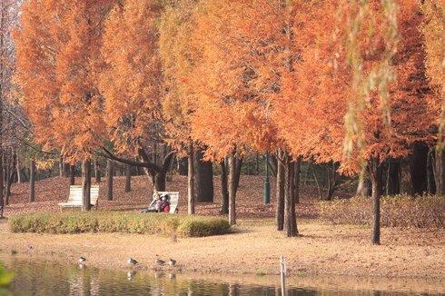 S公園の黄葉