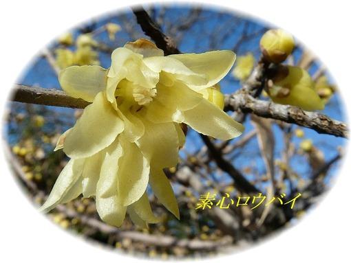 花芯まで黄色なので