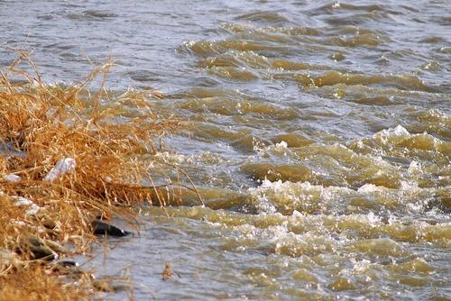 濁った川面では
