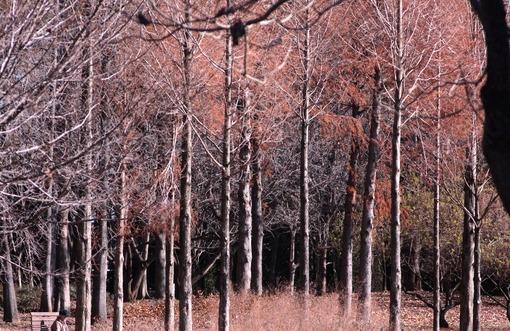 Sの森公園・冬景色