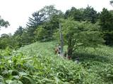 DSCN3803 笹原の尾根を行く