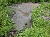 DSCN2131 砂で埋まった湿地