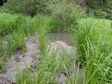 DSCN2133 砂で埋まった湿地