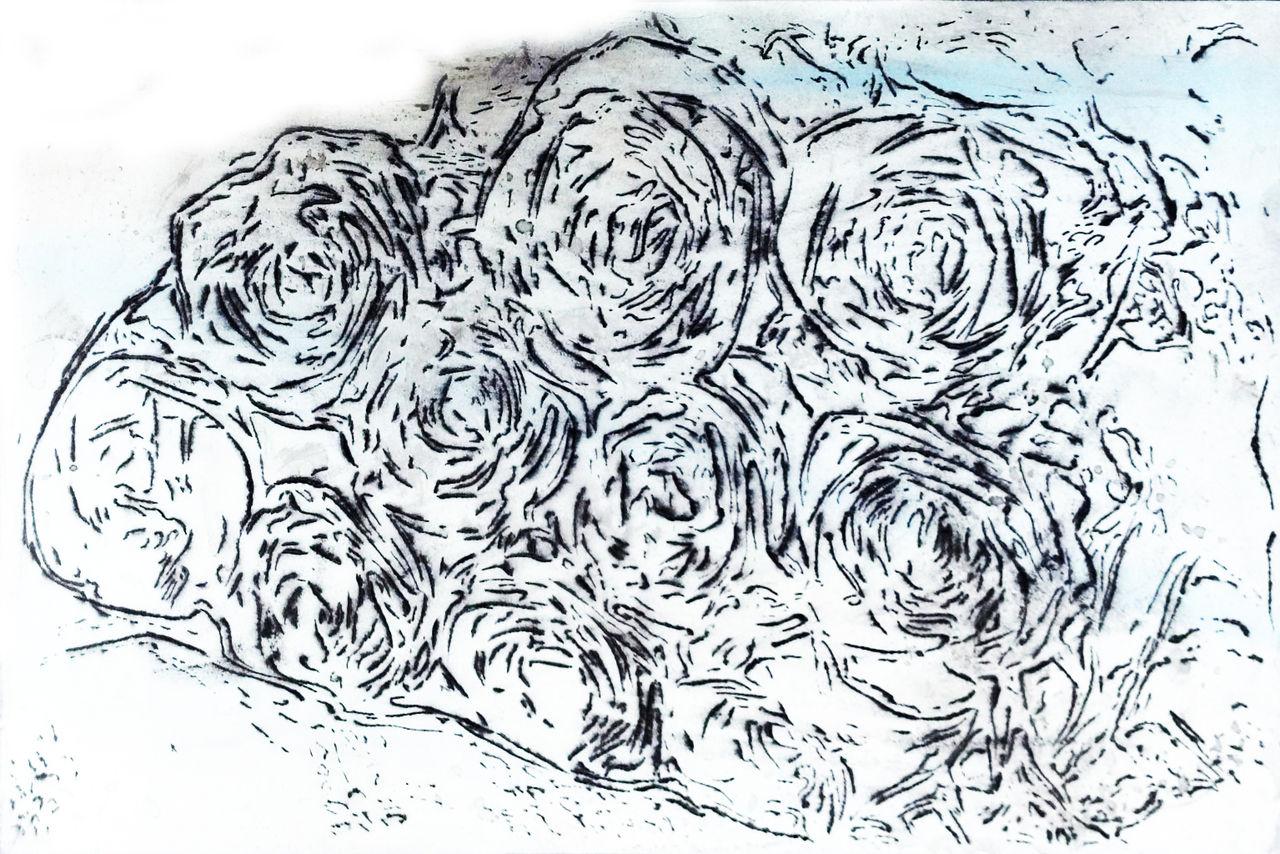 2018 05 薔薇2305Wx204H