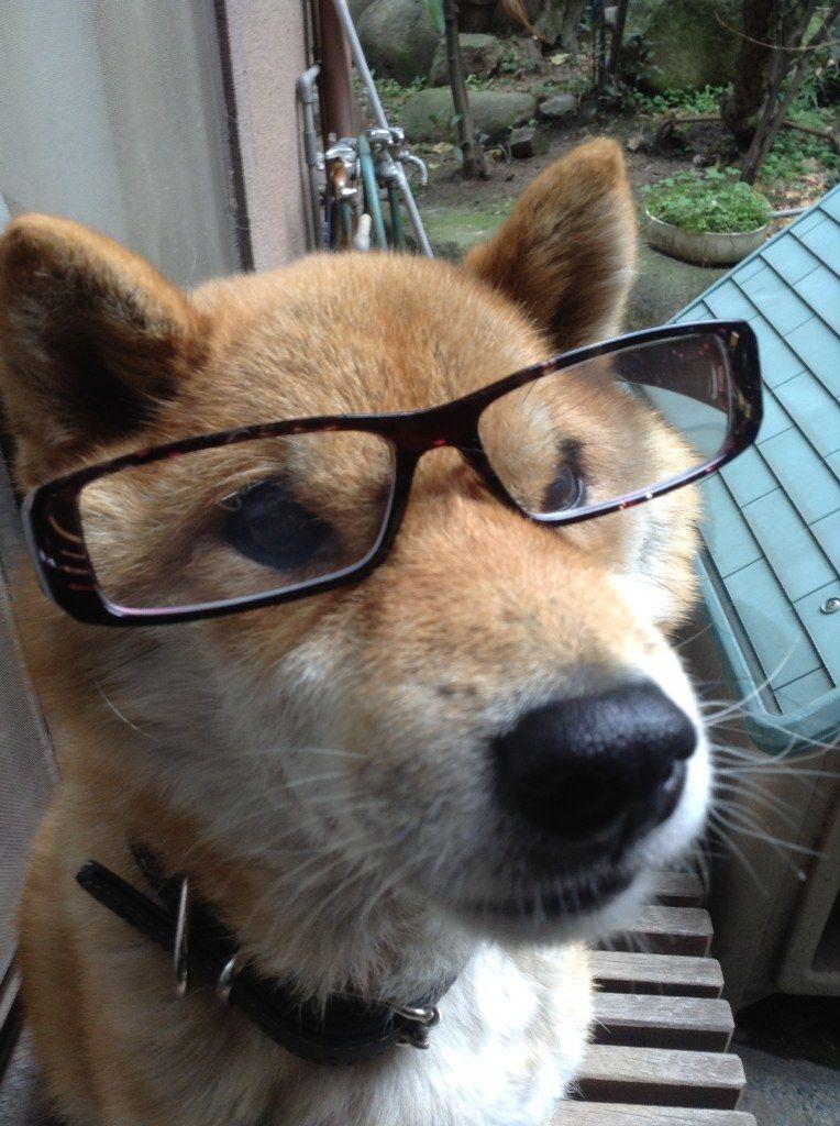 老眼鏡 度数2.5