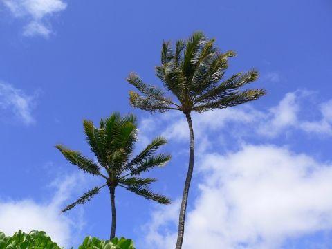ハワイ(オアフ島)で、こんなのありました。その⑤