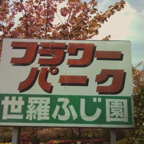 ぼたん桜&ふじ棚満開!の絶好のチャンス