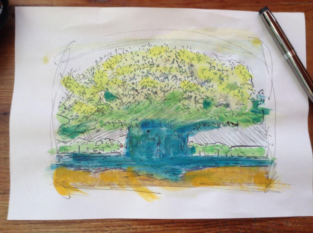 Banyan Tree@Kapiolani Park