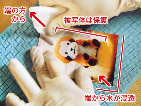 Fuki_Image