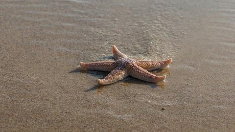 beach-3470318_640