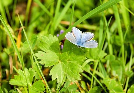 butterfly-2733287_640