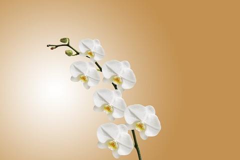 flower-743373_640