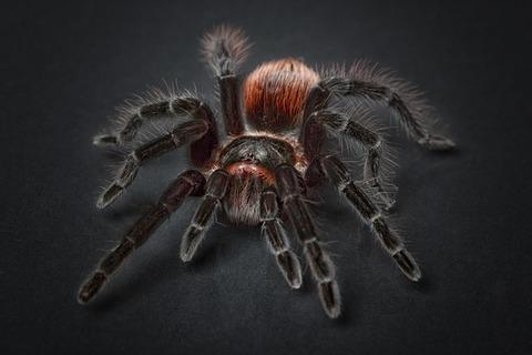 spider-1772769_640
