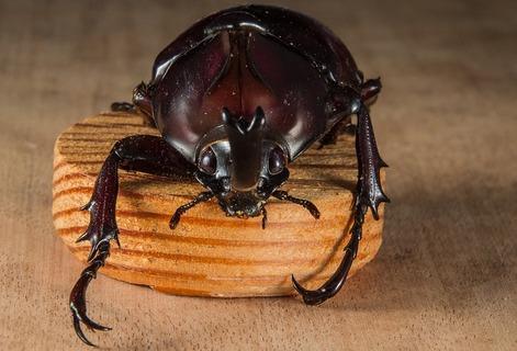 tropical-beetles-195888_640