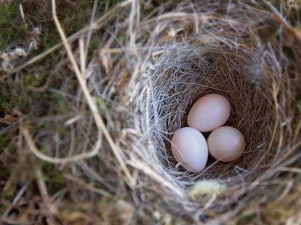 birds-nest-763225_640