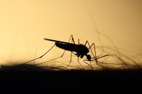 mosquito-3860900_640