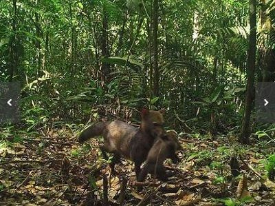 amazon-dog