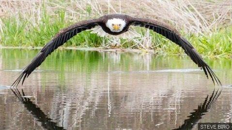 白頭鷲 ブルース