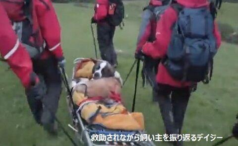 救助されながら飼い主を振り返るデイジー