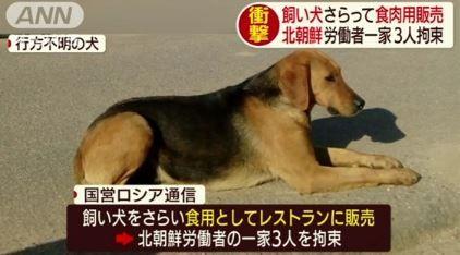 犬をさらって食用肉販売 北朝鮮労働者 (2)