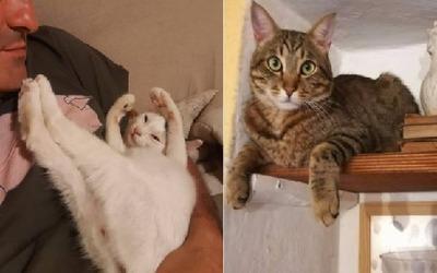 クラウディオと猫
