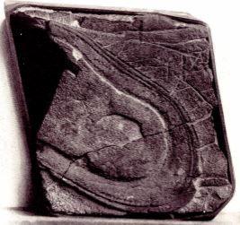 靴の跡の化石
