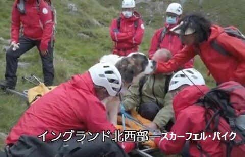 救助犬を救助