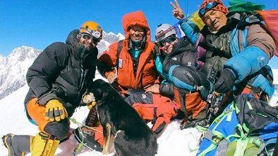 ヒマラヤ登頂 犬