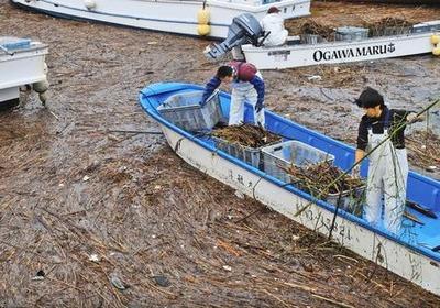 横須賀 海苔養殖業者が漂着ゴミ撤去