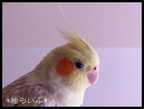 柚らいふRIMG0830