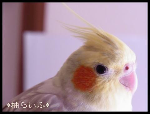 柚らいふRIMG0826