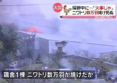 養鶏場で大規模火災 ニワトリ数万羽焼ける 山口県