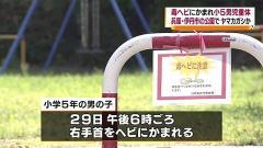 兵庫県伊丹市の公園で毒蛇にかまれ小5男児重体 ヤマカガシか