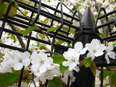 写真:虎渓公園&北高の桜2010 035