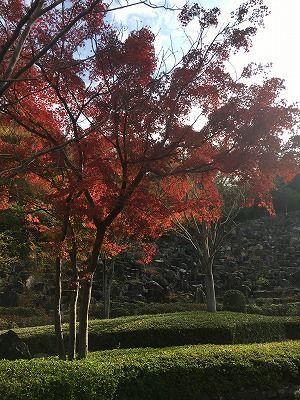 紅葉の季節ですね…ってことは年末が!?
