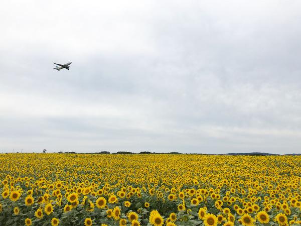 06_1340初ANAは9分遅れで離陸