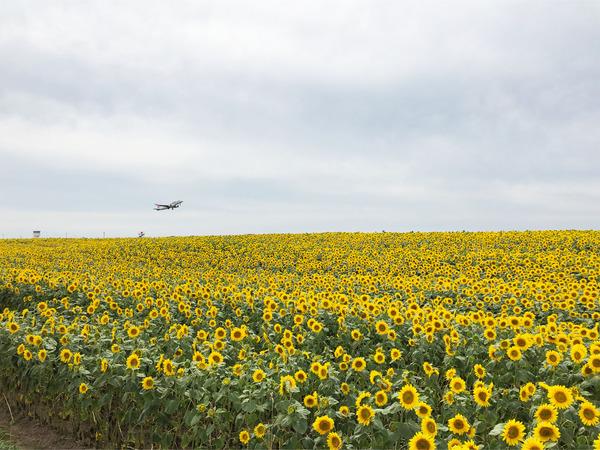 04_1315発JALは30分遅れで離陸