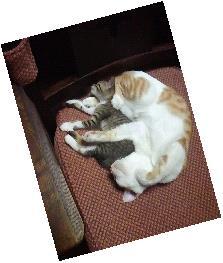 シャトル猫3