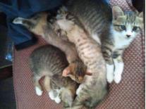 シャトル猫5