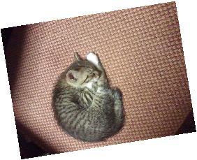 シャトル猫4