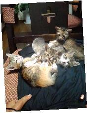 シャトル猫6