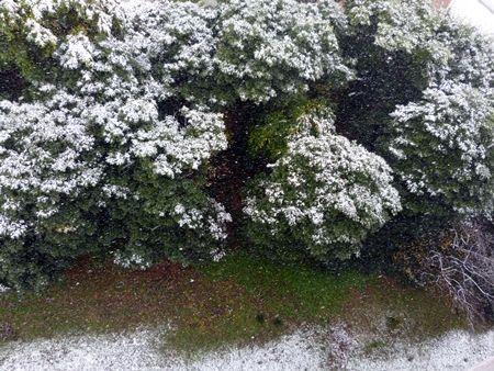 20161124十一月の雪09