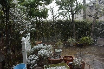 h26赤DSC_晦日の雪