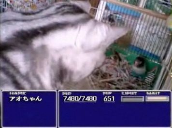 ネコ 文鳥
