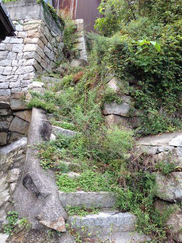 �草生い茂る階段
