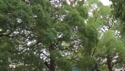 動員された日本軍の珍しい映像(海外の反応)