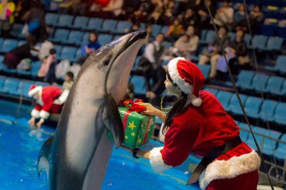 日本のイルカショーを見た外国人がブチ切れ「日本人は極めて野蛮な民族!」